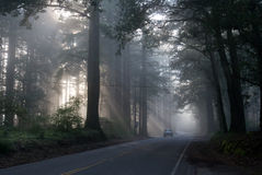 Fog in San Francisco forest Stock Image