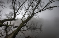 Fog on the Shannon Royalty Free Stock Images