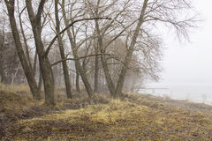 Fog on the shore. Fog on the river bank royalty free stock image
