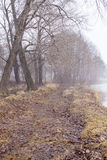 Fog on the shore. Fog on the river bank royalty free stock photos