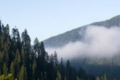 Fog or smoke in the mountains covered with coniferous forests. The concept of fire hazard.  stock images