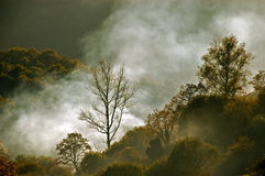 Fog or smoke in the park Royalty Free Stock Photos