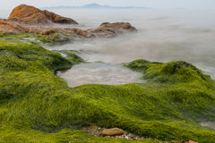 Fog spread over seaweed Stock Image