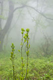 Fog in spring Royalty Free Stock Photography