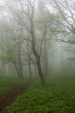 Fog in spring deciduous wood Stock Photo