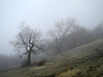 Fog in the spring forest. Crimean mountains stock photos