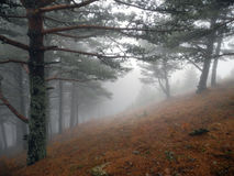 Fog in the spring forest. Crimean mountains royalty free stock images