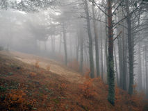 Fog in the spring forest. Crimean mountains royalty free stock photo