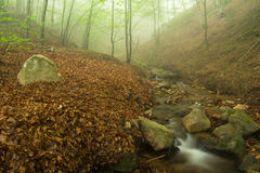 Fog, stream and forest. Royalty Free Stock Photography