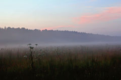 Fog in summer relax field Royalty Free Stock Photography