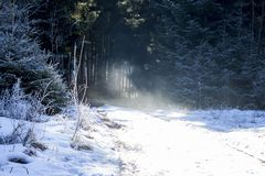 Fog and sun beams in a snow covered mystical winter wonderland. Beautiful and peaceful landscape in Germany Europe royalty free stock photo