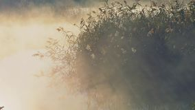 Fog with sun light at frosty morning river stock footage