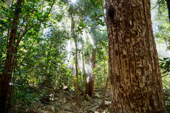 Fog and sun rays in the green dense jungle Royalty Free Stock Photos