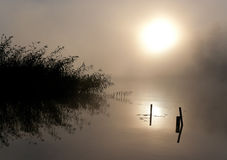 Lake Seliger: Fog Sun Water. Morning nature scene (landscape): the sun in fog (mist) reflected on the water surface (lake, river, pond) along with some plants ( Royalty Free Stock Photography