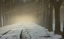 Fog and sunlight Stock Images
