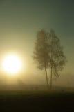 Fog at sunrise Stock Images