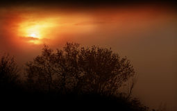 Fog, sunrise Royalty Free Stock Photography