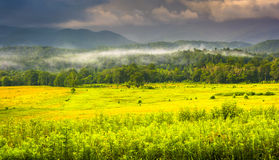 Fog at sunrise, at Cade's Cove, in Great Smoky Mountains Nationa Royalty Free Stock Photos