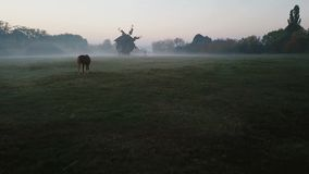 Fog and sunrise. Horse and mill in foggy morning on the field. calm sad depressive mystical atmosphere. Countryside. Autumn morning, Video footage. Creative stock video footage