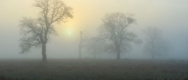 Fog at sunrise panorama Royalty Free Stock Photo
