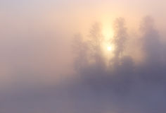 Fog Sunrise Trees. Nature morning misty foggy sunrise summer vibrant serene scene: sun, forest and trees visible through fog (mist) with a blur pattern of cloudy Stock Photo