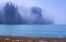 Fog surrounds Rock seastacks with trees on the Pacific coast of Washington state. Seastacks located at Rialto Beach in the Olympic National Park, Washington royalty free stock photo