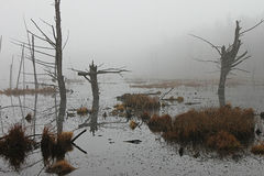Fog at the swamp. Early morning fog at a swamp Royalty Free Stock Photo