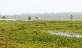 Fog in the swamp Royalty Free Stock Photo