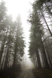 Fog in Tatras Royalty Free Stock Image
