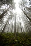 Fog in Tatras Stock Photography