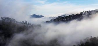Fog in the top mountain, Da Lat city Royalty Free Stock Photos
