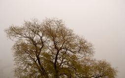 Fog with tree. And branches Stock Photography