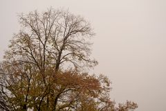 Fog with tree. And branches Royalty Free Stock Photo