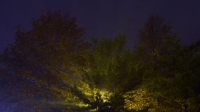 Fog tree lamp night. Trees in the park at night fog tree lamp night stock video