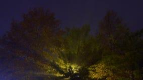 Fog tree lamp night. Trees in the park at night fog tree lamp night stock video
