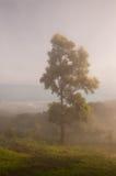 Fog & Tree. It's very beautiful stock photos