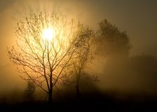 Fog, tree and sun. Fog Royalty Free Stock Images