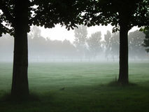 Fog and Trees. Foggy playing field framed by trees Royalty Free Stock Photography