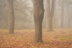 Fog and trees. In the park Royalty Free Stock Photos