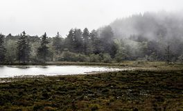 Fog in the Trees at a Coastal Wetland. Fog in the Evergreen Trees at a Coastal Wetland royalty free stock photography