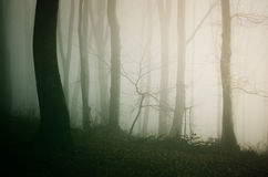 Fog through trees in mysterious haunted Halloween forest Stock Photos