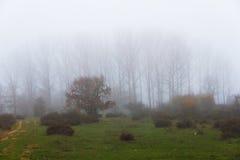 Fog Between Trees Stock Photo