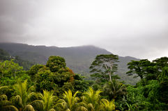 Fog before tropical downpour. Fog on mountain  before tropical downpour scenery Stock Photo