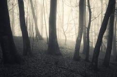 Fog trough beech trees on Halloween Royalty Free Stock Photos
