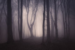 Fog trough trees in dark enchanted forest at night Stock Images