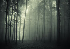 Fog trough trees. In a forest in autumn Stock Photography