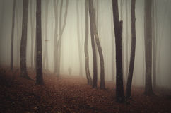 Fog trough trees in mysterious forest after the fall Stock Photos