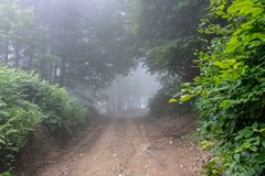 Fog on the unpaved forest road stock image