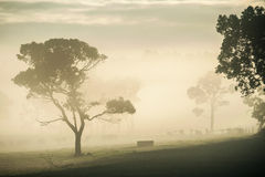 Fog on the Valley Stock Photography