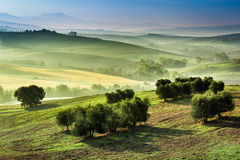 Fog in the valley at sunrise, Tuscany Stock Photos